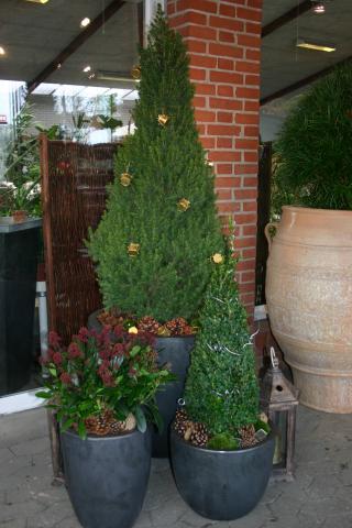 Vinterplanter til krukker